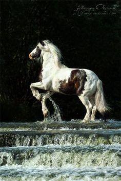 The social horse network https://www.facebook.com/elroseequinecommunity
