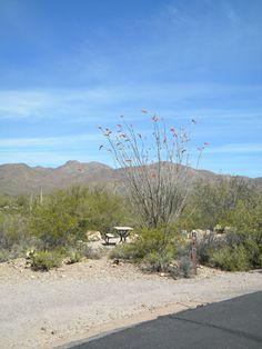 Gilbert Ray Campground Stop #2 outside Saguaro National Park AZ