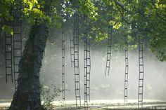 FRANÇOIS MECHAIN, l'arbre aux échelles