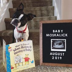 pregnancy announcement with dog Big Sister Announcement, Pregnancy Announcement To Parents, New Baby Announcements, Pregnancy Announcement Dog, Pregnant Announcements, Happy Pregnancy, Pregnancy Humor, Symptoms Pregnancy, Women Pregnancy