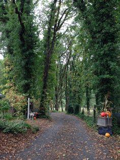Autumn in the Willamette Valley.