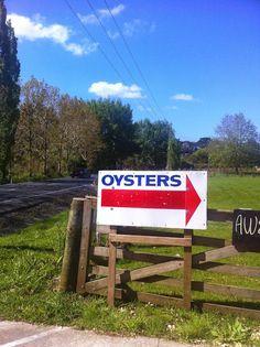 Matakana Oysters Oysters, Landscapes, Paisajes, Scenery