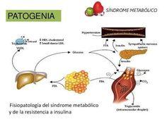 fisiopatologia metabolico - Buscar con Google