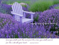 Lavender plants are beautiful perennial evergreen plants that hails from southern Europe. There are a number of types of lavender plants that you can choose from. The Secret Garden, Secret Gardens, Lavender Blue, Lavender Fields, Lavander, Lavender Plants, Lavender Flowers, Lavender Scent, Beautiful Gardens
