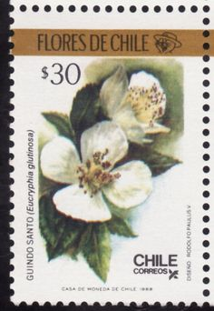 Chile Chile, Flower Stamp, Stamp Collecting, Postage Stamps, Flora, Scrapbook, History, Mailbox, Crafts