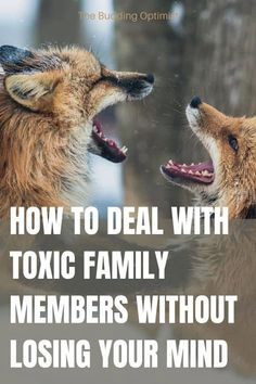 Do you have toxic people in your family? Toxic family members have a lasting impact on our health and wellbeing. Here are 11 signs you have a toxic family member and 5 tips on how to deal with toxic family members. #toxicfamily #toxicfamilymembers #toxicpeople #howtodealwithtoxicfamily #howtodealwithtoxicpeople