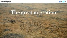 The great migration, The Telegraph