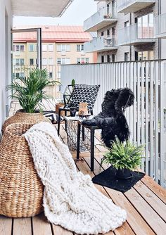 Svart Dalmatinern polykarbonatstol. Stol, plast, polykarbonat, utemöbler, möbler, inredning, köksstol, hall, terass, balkong, rebfre, rebecca fredriksson. http://sweef.se/stolar/95-dalmatinern-stol-i-polykarbonat.html