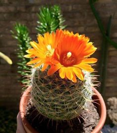 Cactus and Succulents 165