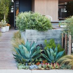 Low-Water Landscapes: 8 Ideas for Dry Gardens, from Designer Daniel Nolan – Gardenista In Los Angeles, dwarf olives (O. europaea 'Mantra') mix with succulents and Stipa feather grass to soften board-formed-concrete walls. Low Water Landscaping, Succulent Landscaping, Front Yard Landscaping, Succulents Garden, Landscaping Ideas, Succulent Seeds, Succulent Garden Ideas, Backyard Ideas, Desert Landscaping Backyard