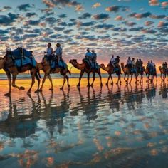 To know more about Cable Beach, Western Australia 'Camels at Sunset', visit Sumally, a social network that gathers together all the wanted things in the world! Featuring over 1 other Cable Beach, Western Australia items too! Beautiful Sunset, Beautiful World, Beautiful Places, Animals Beautiful, Amazing Sunsets, Amazing Nature, Simply Beautiful, Australia Travel, Western Australia