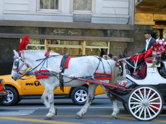 Beautiful horse and carriage near Central Park, NYC