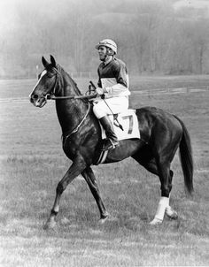 Ben Nevis II (1968-1995) was sired by Casmiri out of Ben Trumiss; Damsire: Hop Bridge. An excellent steeplechase horse, his racing record of 9 wins 21 starts (9-3-2) included two straight victories in the Maryland Hunt Cup (1977-1978), and the Maryland Grand National in the same two years. He won the English Grand National in 1979 at the age of 11. Ben Nevis II was inducted into the Hall of Fame in 2009.