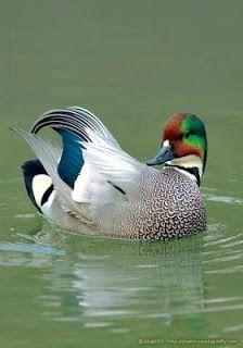 Gify i Obrazki: PIĘKNE PTAKI Pretty Birds, Love Birds, Beautiful Birds, Animals Beautiful, Exotic Birds, Colorful Birds, Exotic Pets, Animals And Pets, Cute Animals
