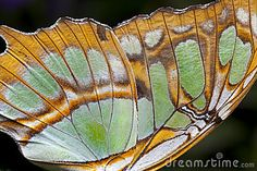Butterfly Close Up Wing Green | Butterfly Wing (closeup) Stock Photo - Image: 13283860