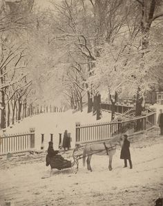 """This photo, """"Snow Scene on the Northeast Corner of the Boston Common"""" (Josiah Johnson Hawes), inspired the scene when May and Joshua go for a sleigh ride around Boston Common. Rare Photos, Vintage Photographs, Vintage Photos, Snow Scenes, Winter Scenes, Old Pictures, Old Photos, Boston Pictures, Boston Common"""