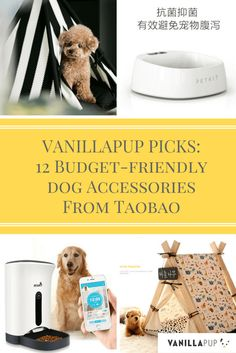 12 budget-friendly accessories from Taobao for the modern dog. Visit Vanillapup.com for more content like this.