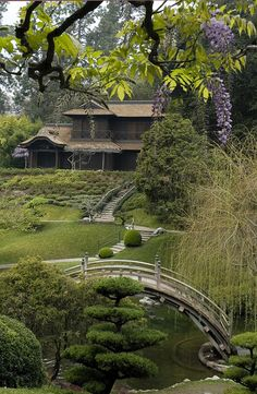 Japanese Garden with wisteria, The Huntington Library