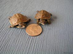 3 toed box turtle -- mynewturtle.com -