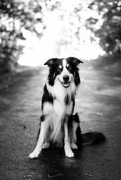 A beautiful border collie in the lane. Photo by Henning Nilson. #bordercollie