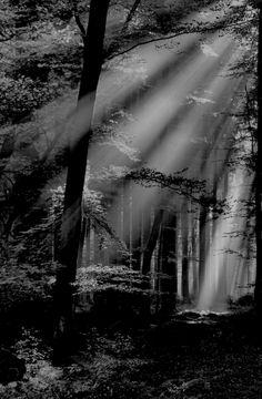 Light ~Repinned Via tami lahis http://absinthius.tumblr.com/post/42100345323/beckshein-golden-sun-rays-germany