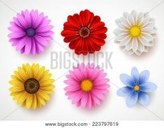 Spring flowers colorful vector set isolated in white background. Collection of daisy and sunflowers with various colors for spring season as graphic elements and decorations. - Buy this stock vector and explore similar vectors at Adob Flyer Design, Branding Design, Royalty Free Images, Royalty Free Stock Photos, Retail Logo, Gerbera, Spring Flowers, White Flowers, Daisy