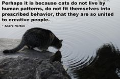 Perhaps it is because cats do not live by human patterns