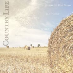 Paper House Productions - Farm Collection - 12 x 12 Paper - Field of Hay at Scrapbook.com
