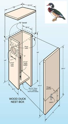 Wood duck nest box plans bird houses bird feeders hummingbird when it comes to birds avid watchers know that you can never have too many bird houses in your yard birds appreciate these items during the nesting and publicscrutiny Choice Image