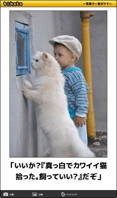 Animals And Pets, Funny Animals, Cute Animals, What's New Pussycat, Kawaii Cat, Silly Cats, White Cats, Cat Life, Make You Smile