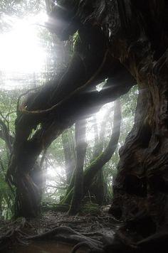 Yakushima, Kagoshima, Japan