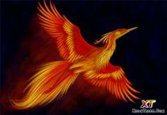 phoenix illustration - Google Search