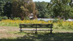 YaleNews | Yale's urban meadows are having a growth spurt