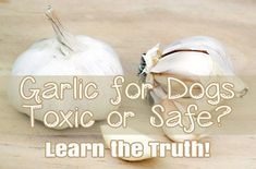 Garlic Safety for Dogs- the bitter truth