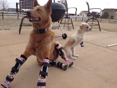 disABLED dogs...because they're happy!