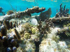 Barreira de Corais de Belize