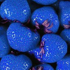 BLUE STRAWBERRY Organic Seeds ~ Flower Rare Garden Plants Seedling Strawberries
