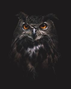 Owl you need is love 🖤 shot with Owl Wallpaper Iphone, Lion Wallpaper, Animal Wallpaper, Owl Photos, Owl Pictures, Owl Eye Tattoo, Brust Tattoo, Owl Artwork, Owl Tattoo Design