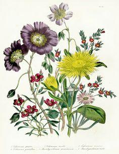 Коллекция картинок: Старинные ботанические принты ,часть 2