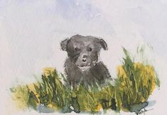 Puppy ORIGINAL Miniature Watercolour ACEO Canine Dog view here: https://www.etsy.com/uk/listing/572629400/puppy-original-miniature-watercolour?ref=shop_home_active_1