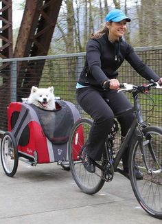 Ride like the wind while your pup enjoys the passing scenery!
