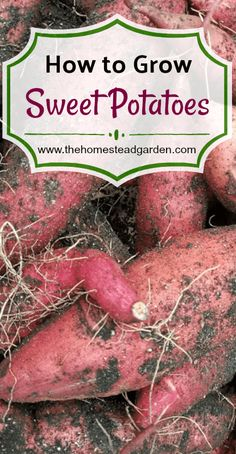 Flower Gardening How to Grow Sweet Potatoes: tips on when to plant, what you need to do to the soil, proper growing tips, and when to harvest. Growing sweet potatoes has never been easier. Gardening Supplies, Organic Vegetables, Growing Vegetables, Vegetables Garden, Fruit Garden, Veggies, Gardening For Beginners, Gardening Tips, Gardening Shoes