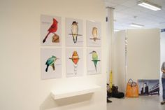 Bea Shireen: My exhibition wall space