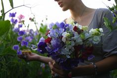 Ask the Expert: 7 Tips to Grow Cut Flowers in a Tiny Garden, from Floret Farm
