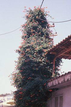 sylvain emmanuel via all the mountainsI want this house/tree