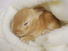 Baby Bunny Wallpaper Pictures 5 HD Wallpapers