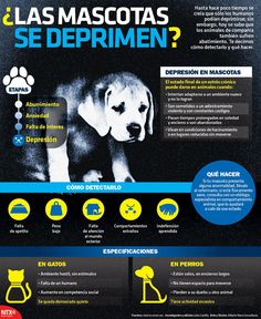 ¿La mascotas se deprimen? #Infographic