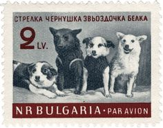 This 1961 Bulgarian stamp shows a group portrait of Strelka, Chernushka, Zvezdochka, and Belka (Russian space dogs), taken at the press conference held on March 28, 1961. (© FUEL Publishing)