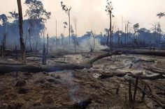 MSU scientist finds deforestation decreases biodiversity in bacteria, too