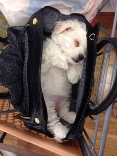 Maltese and Children: Is It a Good Combination - Champion Dogs Cute Puppies, Cute Dogs, Dogs And Puppies, Doggies, Cute Baby Animals, Animals And Pets, Maltese Dogs, Teacup Maltese Puppies, Tier Fotos